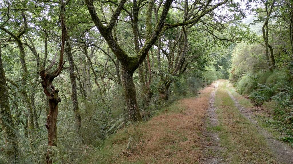 Camino de Arandedo