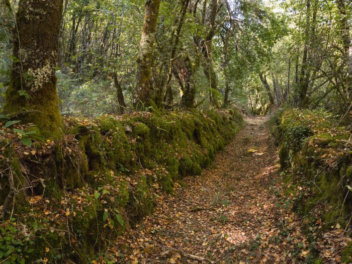 Espectacular Camino entre Vilanova y Santa Cruz